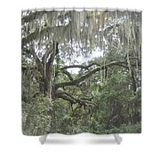 Live Oaks And Spanish Moss C Shower Curtain