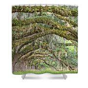 Live Oaks Shower Curtain