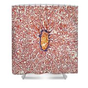 Liver Tissue Of A Cat Lm Shower Curtain