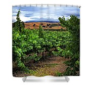 Livermore Vineyard 1 Shower Curtain