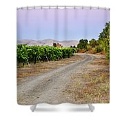 Livermore Vineyard 3 Shower Curtain