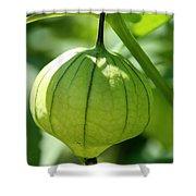 Living Lantern Shower Curtain