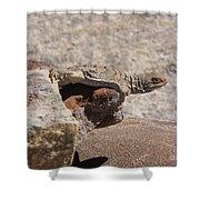 lizard from central Madagascar Shower Curtain