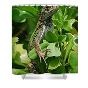 Lizard In Hedge Shower Curtain