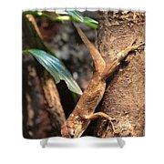 Lizard On The Tree Shower Curtain