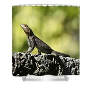 Lizard On The Wall Shower Curtain