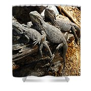 Lizards Shower Curtain by Les Cunliffe