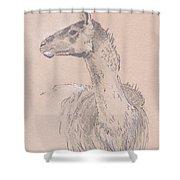 Llama Drawing Shower Curtain