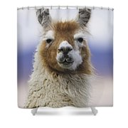 Llama In Bolivia Shower Curtain