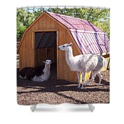 Llama Just Chilling Shower Curtain