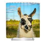 Llama Portrait Shower Curtain