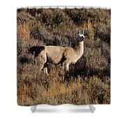 Llama Shower Curtain