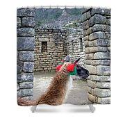 Llama Touring Machu Picchu Shower Curtain