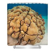 Lobed Star Coral Shower Curtain