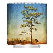 Loblolly Pine Along The Chesapeake Shower Curtain