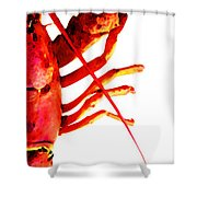Lobster - The Right Side Shower Curtain