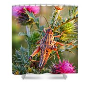 Locust And Thistle 2am-110423 Shower Curtain
