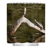 Log Climbing Turtle Shower Curtain