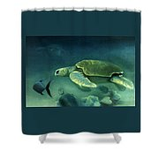 Loggerhead Turtle Shower Curtain