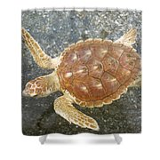 Loggerhead Turtle Shower Curtain