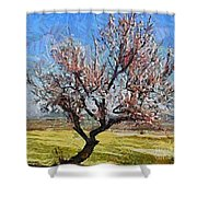 Lone Almond Tree In Bloom Shower Curtain