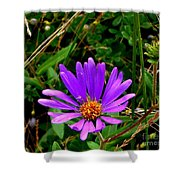 Lone Aster Shower Curtain