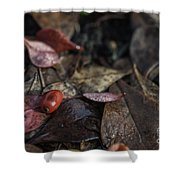 Lone Berry Shower Curtain