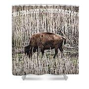 Lone Buffalo Shower Curtain
