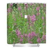 Lone Butterfly Shower Curtain
