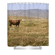 Lone Cow In Grassy Field Shower Curtain