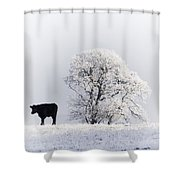 Lone Cow Shower Curtain