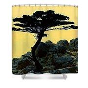 Lone Cypress Companion Shower Curtain