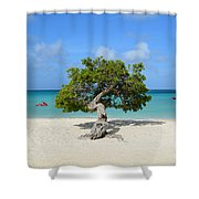 Lone Divi Tree In Aruba Shower Curtain