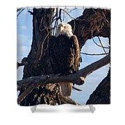 Lone Eagle Shower Curtain