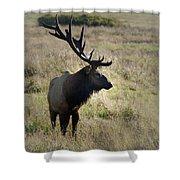 Lone Elk Shower Curtain