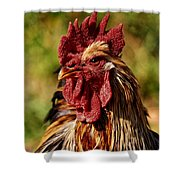 Lone Farm Rooster Portrait Shower Curtain