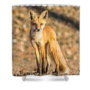 Lone Fox Shower Curtain