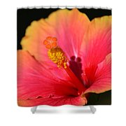 Lone Hibiscus Shower Curtain