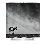 Lone Horse Shower Curtain by Julian Eales