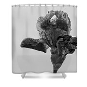 Lone Iris Black And White Shower Curtain