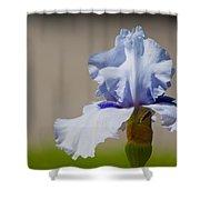 Lone Iris Shower Curtain