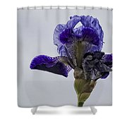 Lone Iris  Shower Curtain