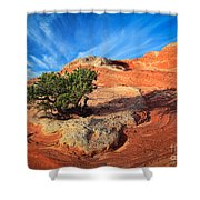 Lone Juniper Shower Curtain by Inge Johnsson