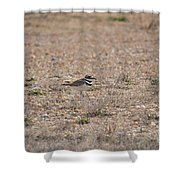 Lone Killdeer Shower Curtain