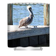 Lone Pelican On Pier Shower Curtain