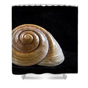 Lone Shell Shower Curtain