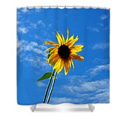 Lone Sunflower In A Summer Blue Sky Shower Curtain
