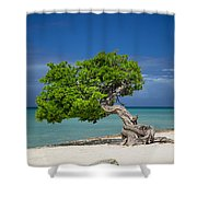 Lone Tree - Aruba Shower Curtain