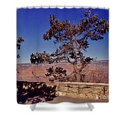 Lone Tree Along The South Rim Shower Curtain