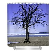 Lone Tree At Fort Gratiot Light House  Shower Curtain